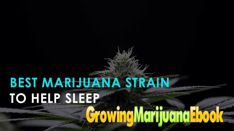 Best Marijuana Strain to Help Sleep